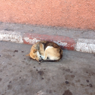 Medina dog having a snooze