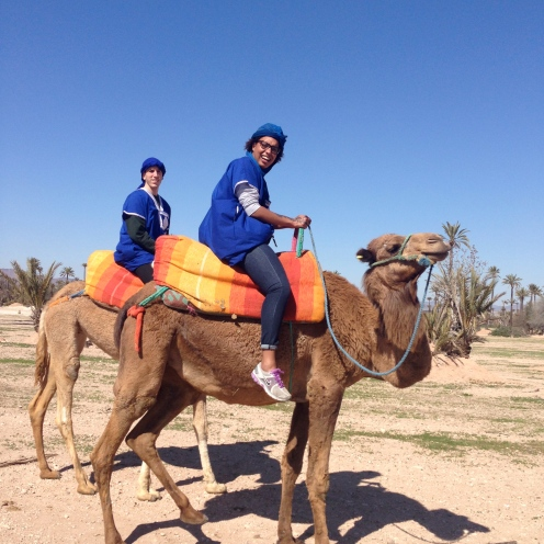 Camel rides in the Palmerie